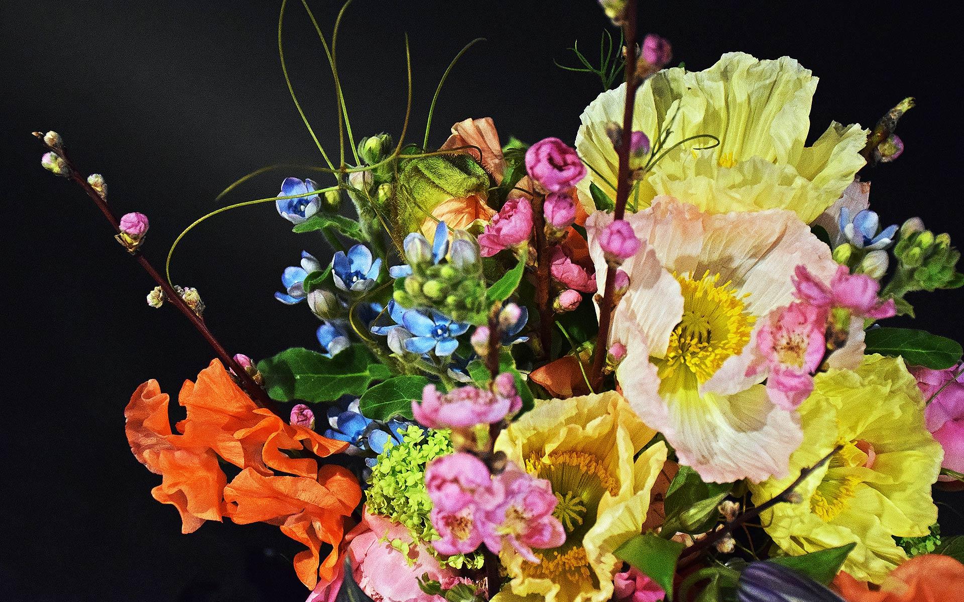 anggrek verse bloemen