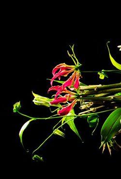 rouwbloemen rouwstuk anggrek