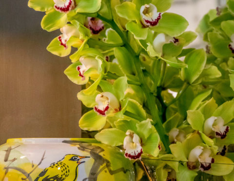 Anggrek Amsterdam Cymbidium Orchidee
